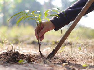 boom-planten